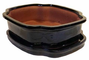 "Michael Carr - 10"" Bonsai Pot - Black Squared Clover with Tray"