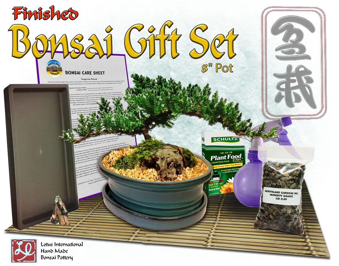 "Finished Bonsai Gift Set #2 in 8"" Pot"