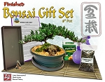 Finished Bonsai Gift Set #2 in 8