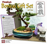 Finished Bonsai Gift Set #3 in 10