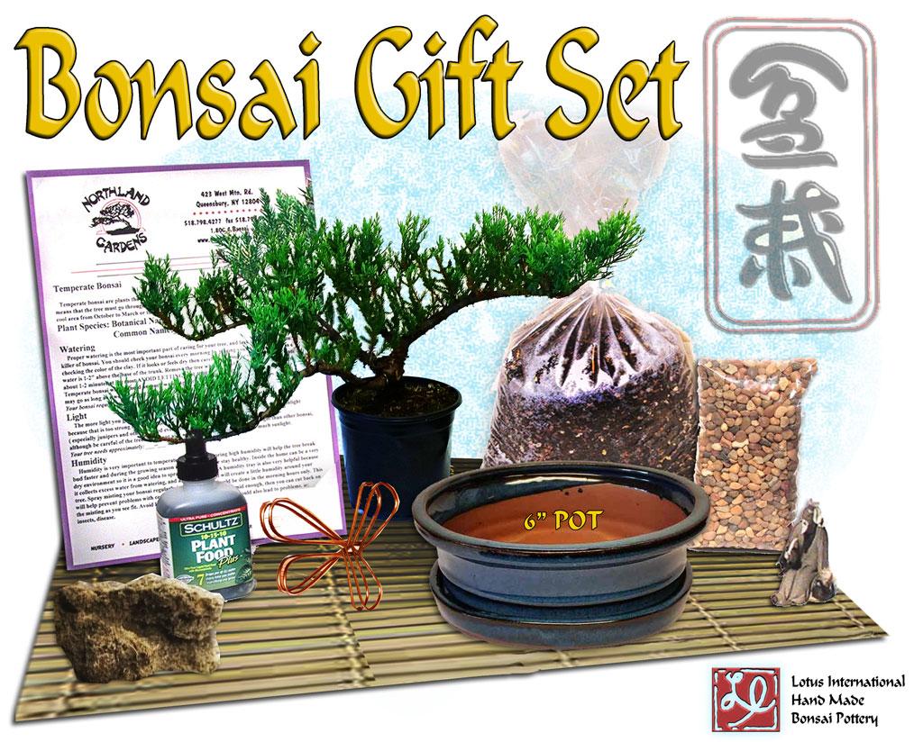 """DIY - Bonsai Gift Set #1 - w/ 6"""" Pot"""