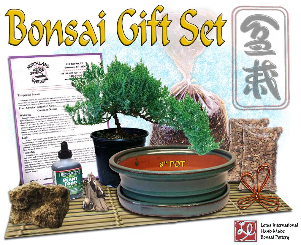 """DIY - Bonsai Gift Set #2 - w/ 8"""" Pot"""