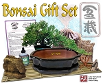 DIY - Bonsai Gift Set #3 - w/ 10